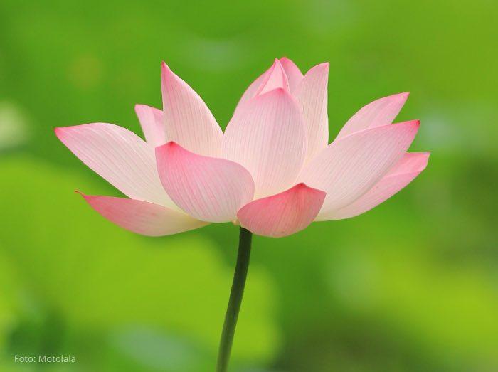 Leben mit Krebs – Mit Achtsamkeit zur seelischen Ausgeglichenheit